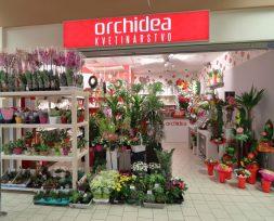 Kvetinárstvo Orchidea - Kaufland