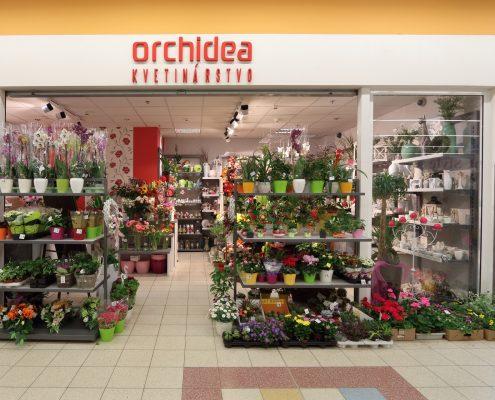 Kvetinárstvo Orchidea - TESCO